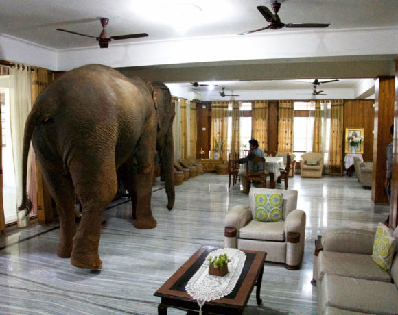 Elephant in the room. Digital photo, colour, 2019