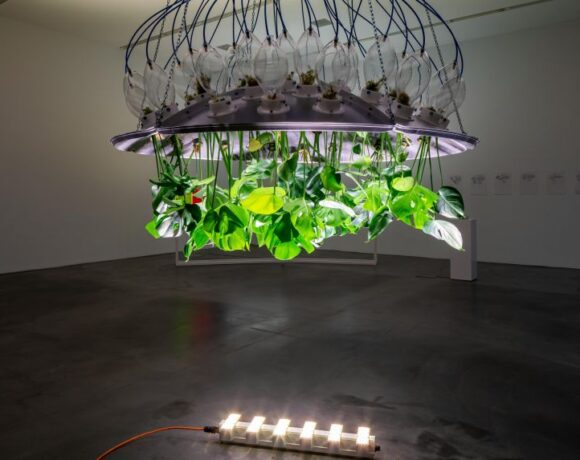Potential Worlds 2: Merry Maggic, Plants of the Future, 2013-2020, commissioned by Migros Museum für Gegenwartskunst and YARAT Contemporary Art Space. Ph Lorenzo Pusterla, courtesy the artist
